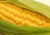 農業の共同体を立ち上げたい