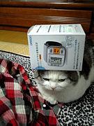 高血圧・Hypertension