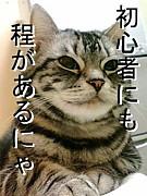 【MHP2G】初心者・中級者オフ