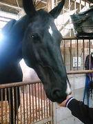 会いたい馬がイマス
