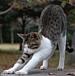 日本女豹組合