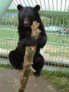 動物と自然を愛するやさしい人達