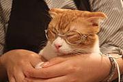 スイッチ@猫の居る休憩所299