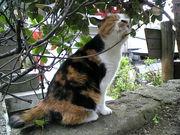 猫は神様である!!