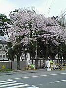 ◇◆仙台大学スポマス◆◇