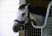 西山牧場の馬(競馬)