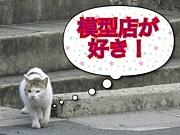 模型店が好き(^O^☆♪