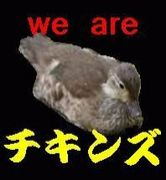 WE ARE チキンズ