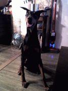 BIG DOGGY'S