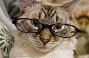 眼鏡が本体だ(`・ω・´)キリッ