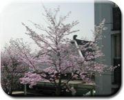 2006年 東大寺学園卒業者