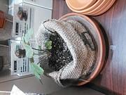 麻袋栽培家