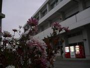☆武庫荘総合高校☆