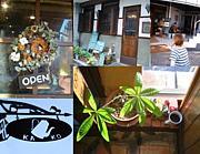 coffee shop KAKO