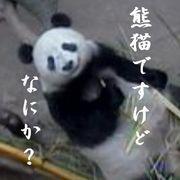 熊猫ですけどなにか?