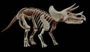 イマイチ恐竜が信じられない