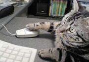 猫の手、借りたいんですけど