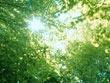 稲城の自然を保つ会