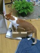 やっぱり猫が好き☆
