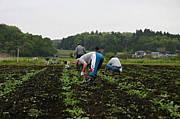栃木で野菜栽培