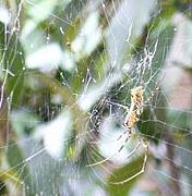 よく蜘蛛の巣に引っかかる