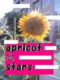 Cheerleading Apricot☆Stars