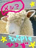 ☆トリプル羊☆1979年3月26日生