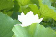 沖縄の無名の聖者☆目覚め宇宙心