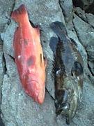 魚突きと海