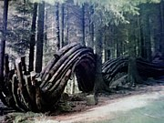 イデアの森の秘密