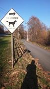 八ヶ岳 犬の牧場