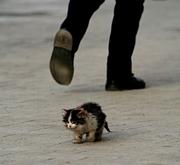 犬猫 生体展示販売に反対!