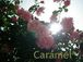 雑貨Shop Caramel*