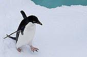 ペンギン歩き。