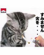 【鉄】苫小牧〜札幌【拳】