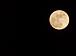 満月ロゼの会
