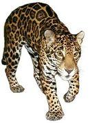 ジャガーが大好き!