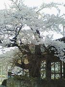 弘前中央高校H18年卒34HR