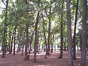 林間公園と希少種ツミを護り隊