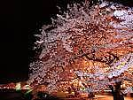 ☆夜桜会☆