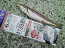 富山キス釣り同好会