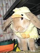 東広島ウサギの会