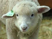 迷える子羊を(恋愛)救う会