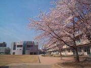 千葉市立新宿小学校