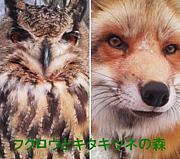 フクロウとキタキツネの森