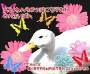 1984年9月16日生まれ関西地方版
