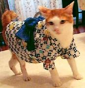 オシャレ猫さん