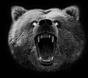 熊の生息地