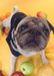 犬とおでかけ 犬連れOKの施設☆