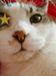 片目の猫の会